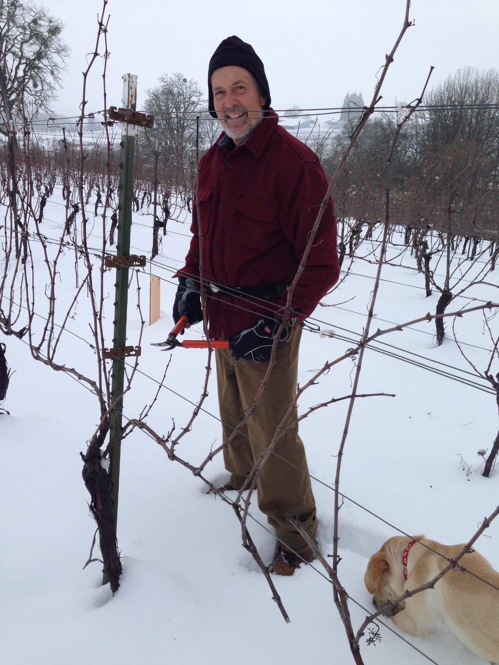 Great photo here of Stag Hollow winemaker, Mark Huff, in the estate vineyard.
