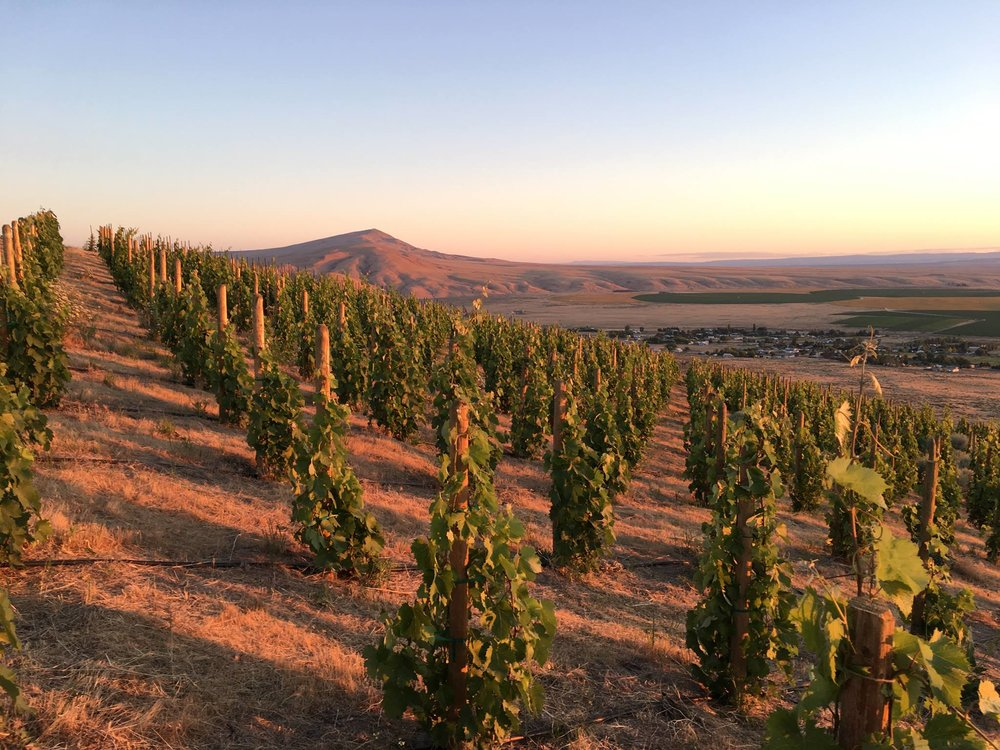 Red Mountain Elevated is a very exciting new project that utilizes one of the exciting terroirs in Washington