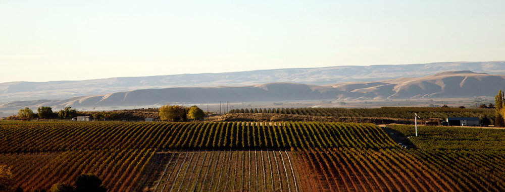 Beautiful views from their Two Blondes Vineyard.