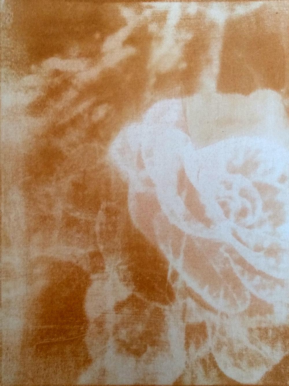 Gum bichromate print study (succulent bloom), 2018