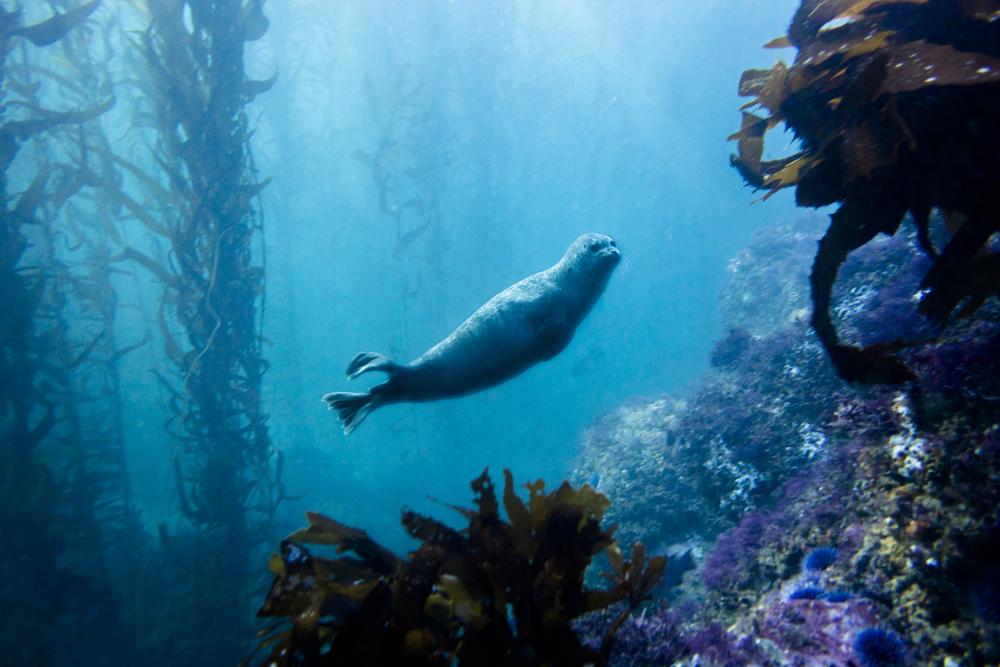 131222_imagehero_underwater_002.jpg