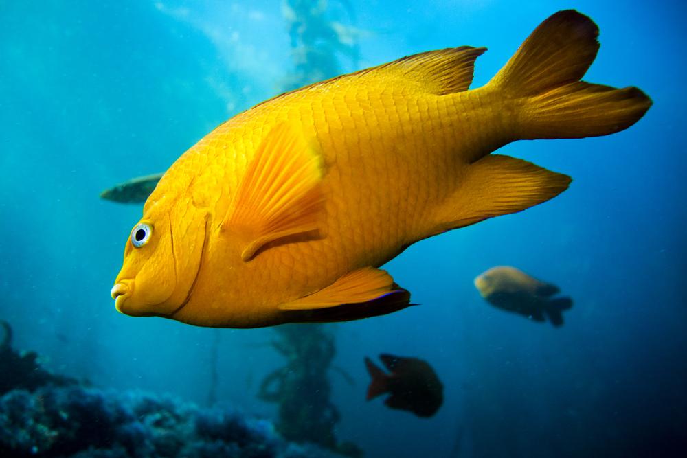 131214_imagehero_underwater_001.jpg