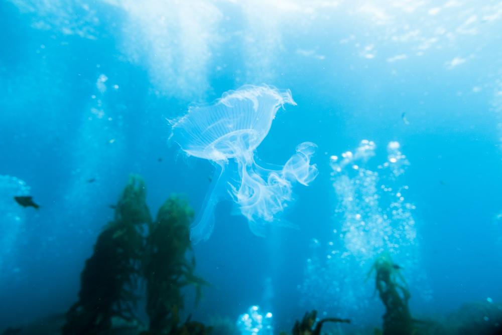 141109_imagehero_underwater_001.jpg