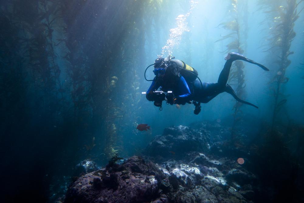 150101_imagehero_underwater_001.jpg