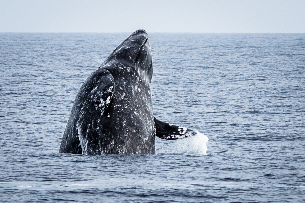 131218_wildlife_001.jpg