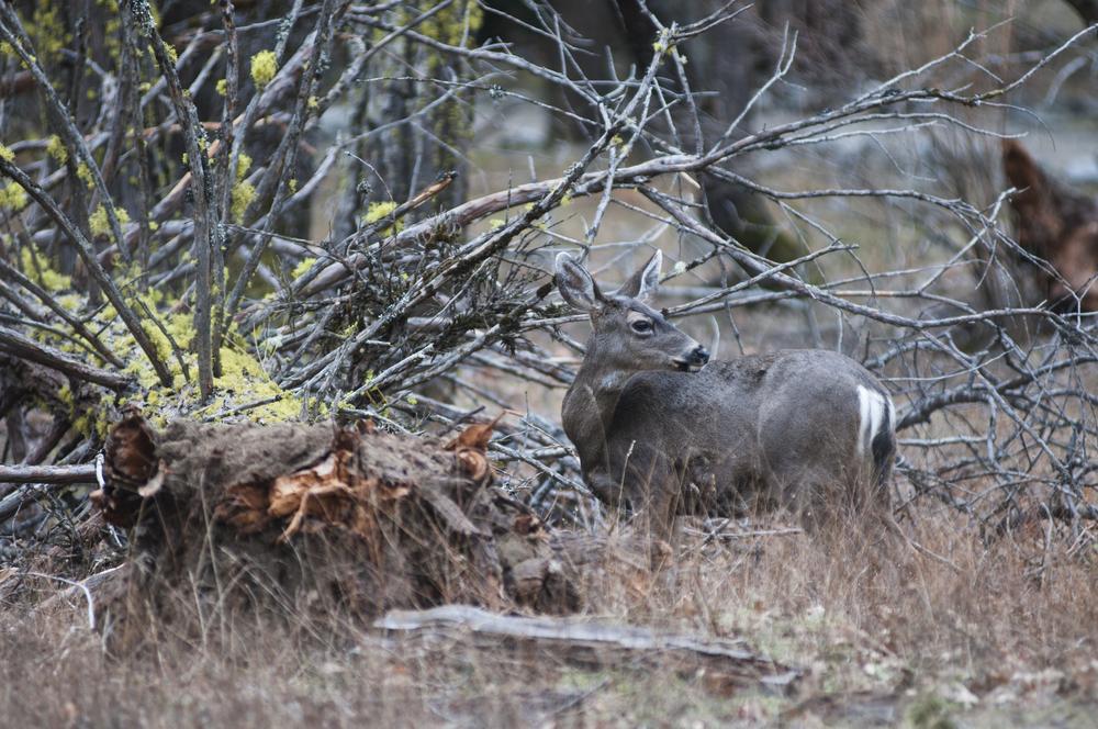 111231_wildlife_001.jpg