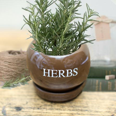 A-HERBS.png
