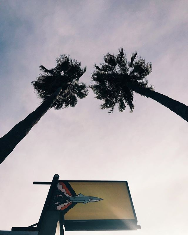 🌴🦈🌴 Week's looking up! Hope everyone is settling back into reality after the holiday weekend!  __ #paramountcoffeeproject #pcpfairfax #losangelescoffee #specialtycoffee