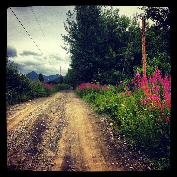 dirt road fireweed.jpg