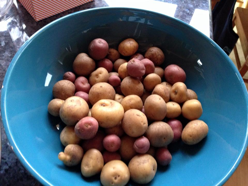 garden potatoes.jpg