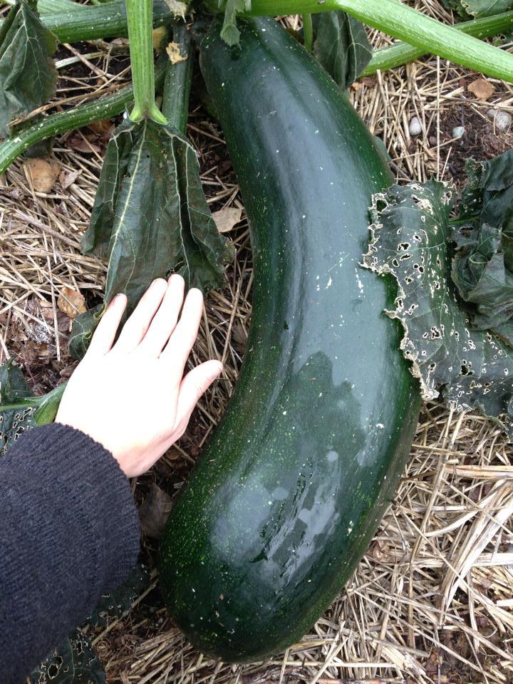holy zucchini.jpg
