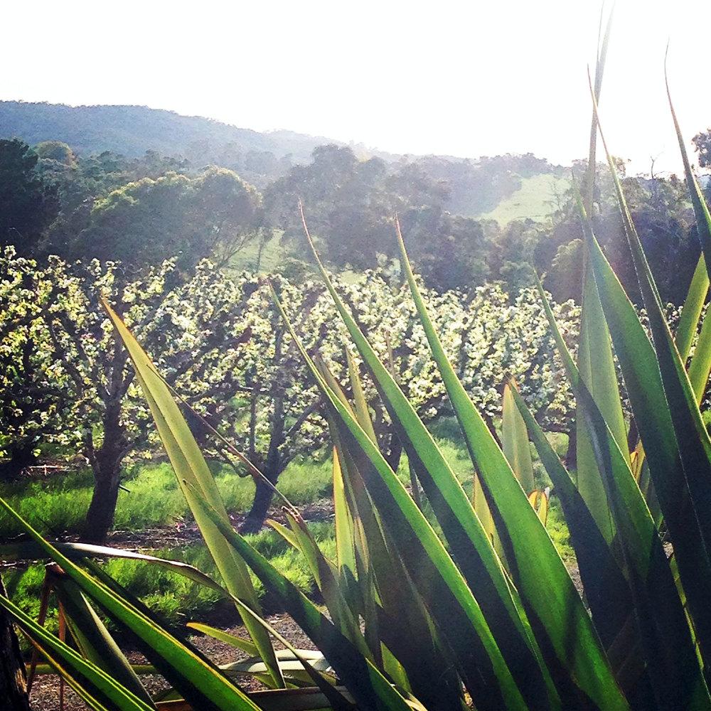 orchard image.JPG