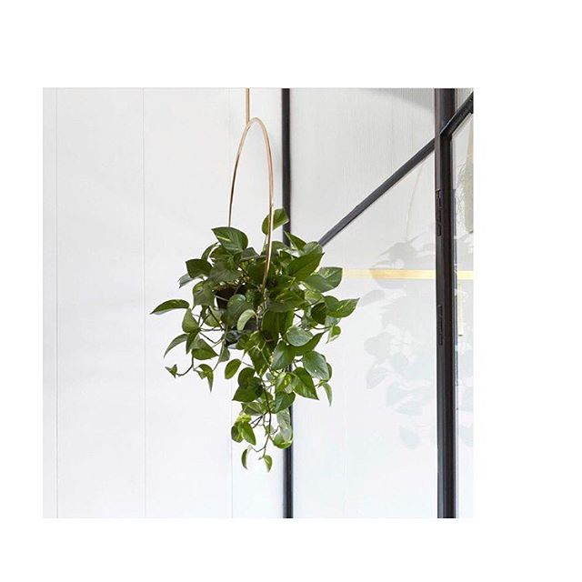Loving this lovely hanging pretty at @boosa716 ✨ The Purist in Brass is available online 🌿