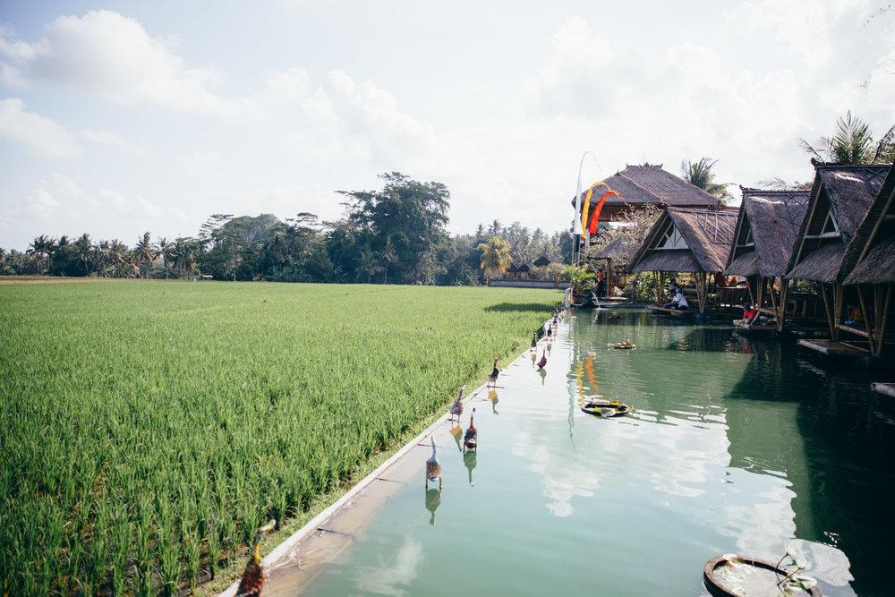 Bali - Day 6&7