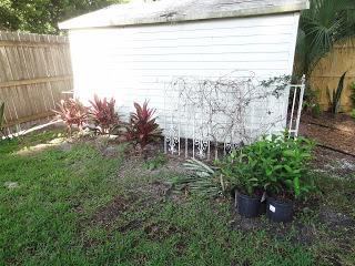 Plants%2Bat%2BShed.JPG