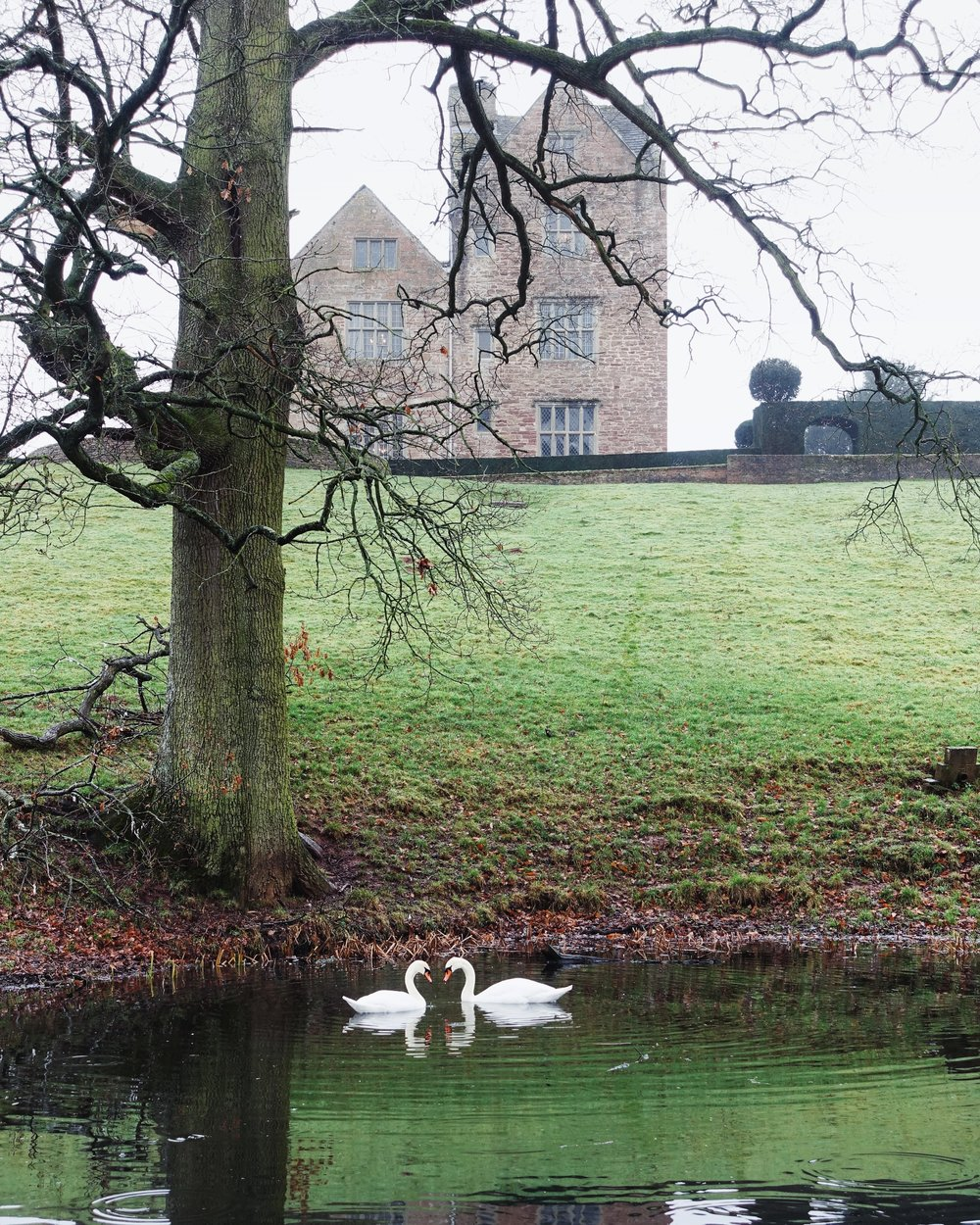 Another week in Treowen Manor