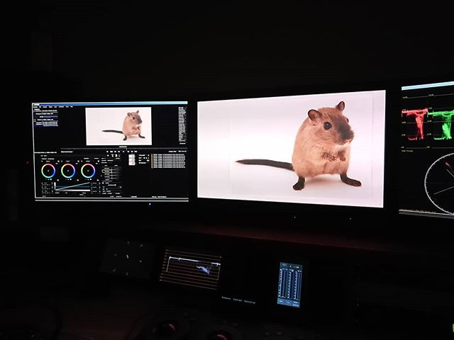 About to grade a picure of a rat. Or is it a mouse? Does it matter? 🤔