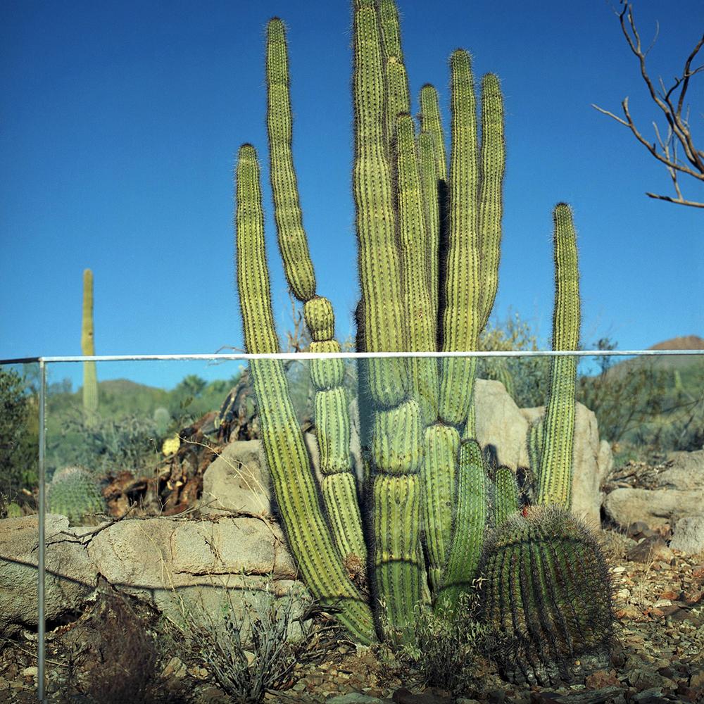 Cactus, Desert Museum