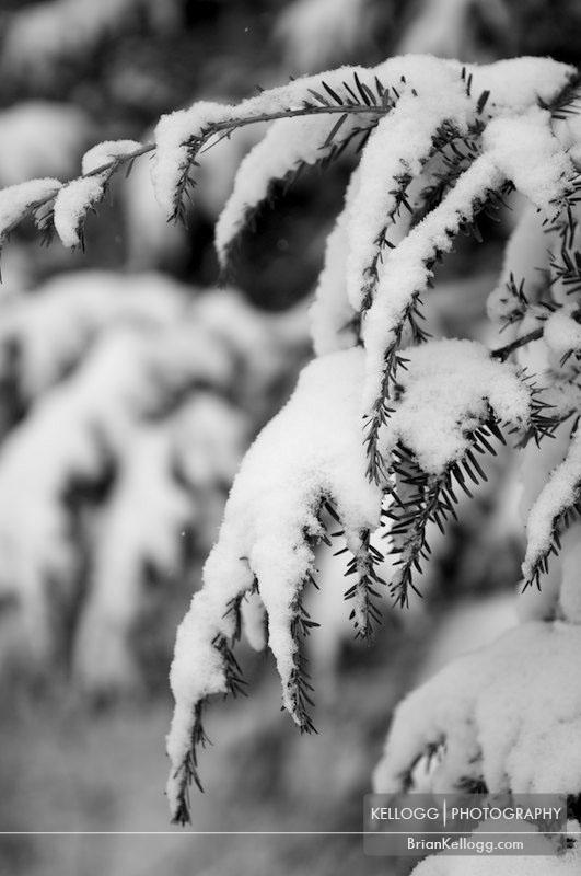 Inniswood Gardens - Westerville Ohio Snow