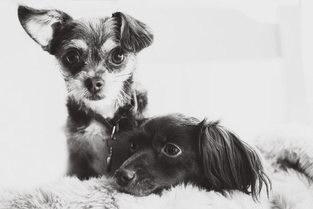 JuliaLindholmPhotos_Puppies4.jpg