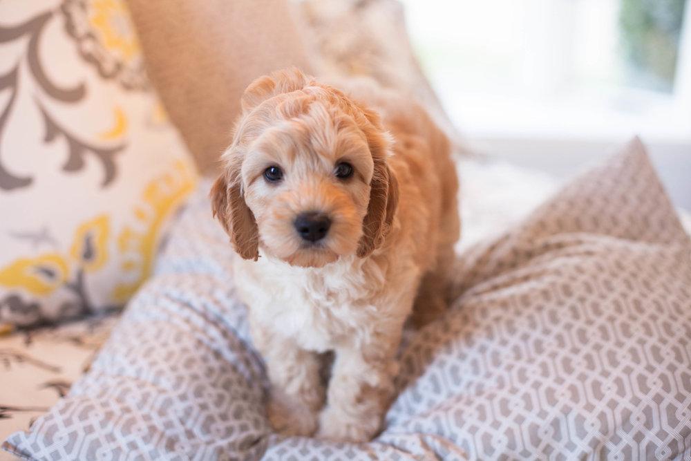 JuliaLindholmPhotos_Puppies18.jpg