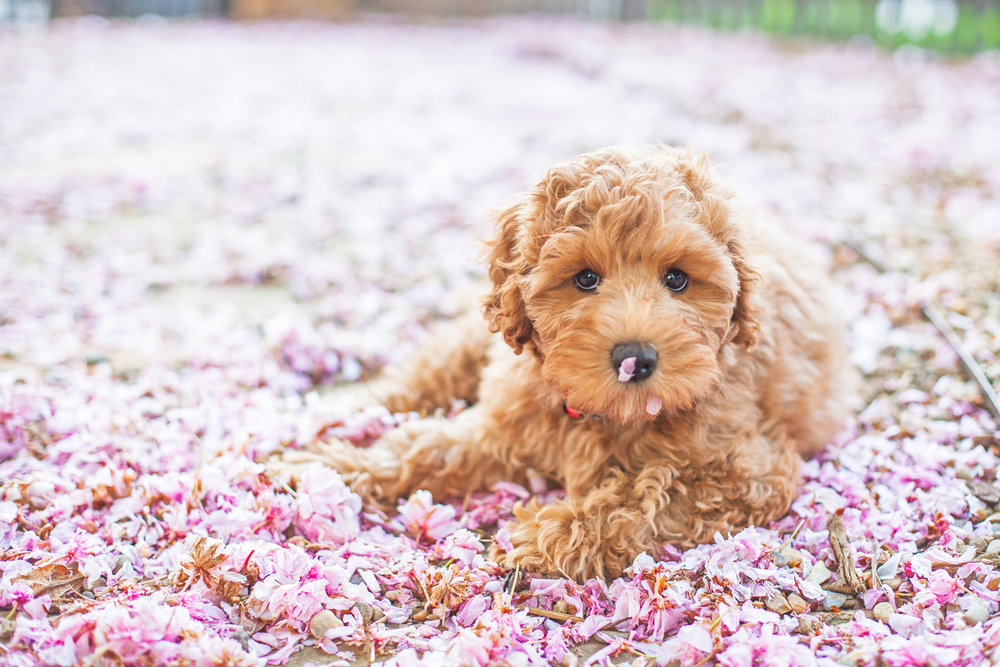 JuliaLindholmPhotos_Puppies19.jpg