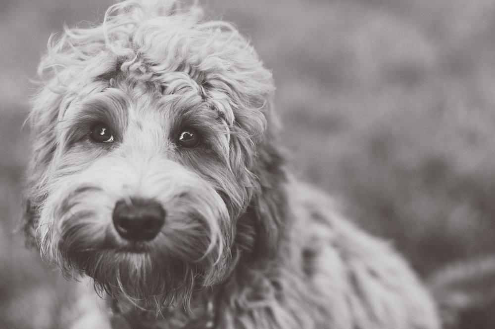 JuliaLindholmPhotos_Puppies24.jpg