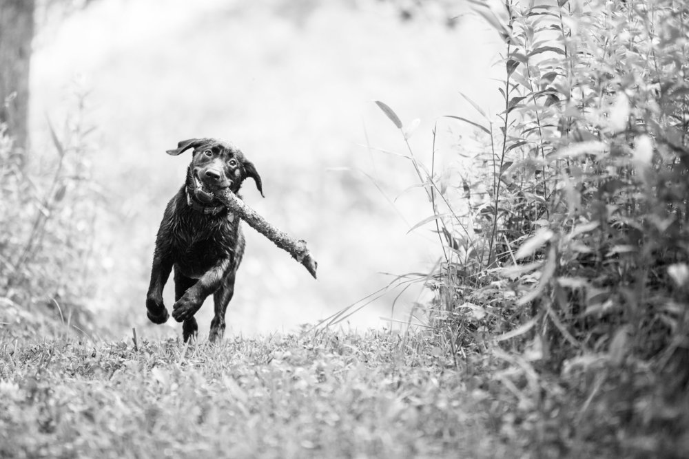 JuliaLindholmPhotos_Puppies32.jpg