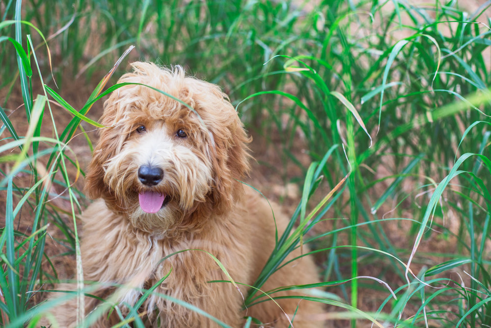 JuliaLindholmPhotos_Puppies31.jpg