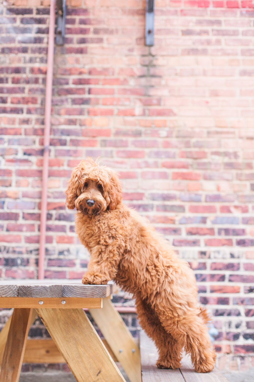 JuliaLindholmPhotos_Puppies42.jpg