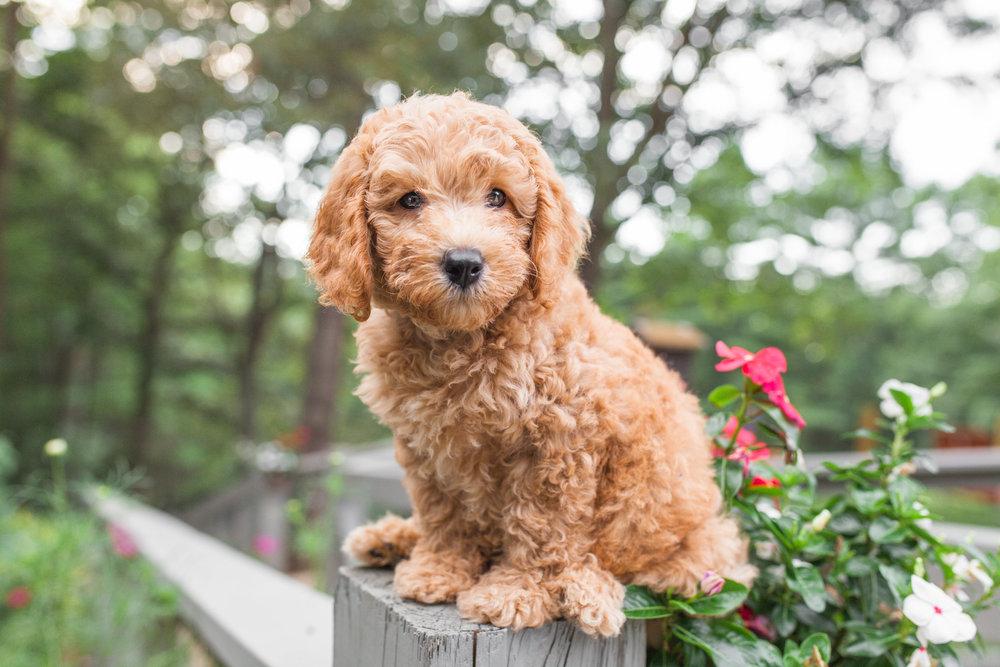 JuliaLindholmPhotos_Puppies46.jpg