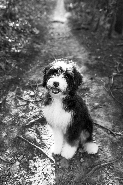 JuliaLindholmPhotos_Puppies49.jpg