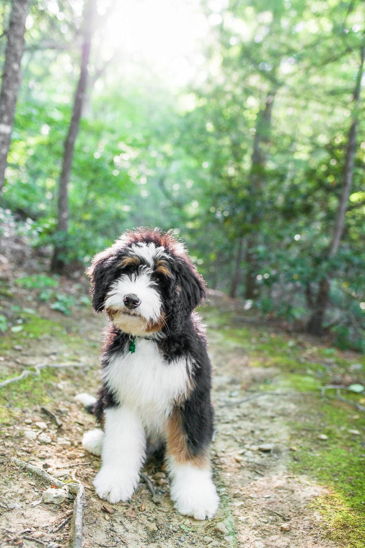 JuliaLindholmPhotos_Puppies51.jpg