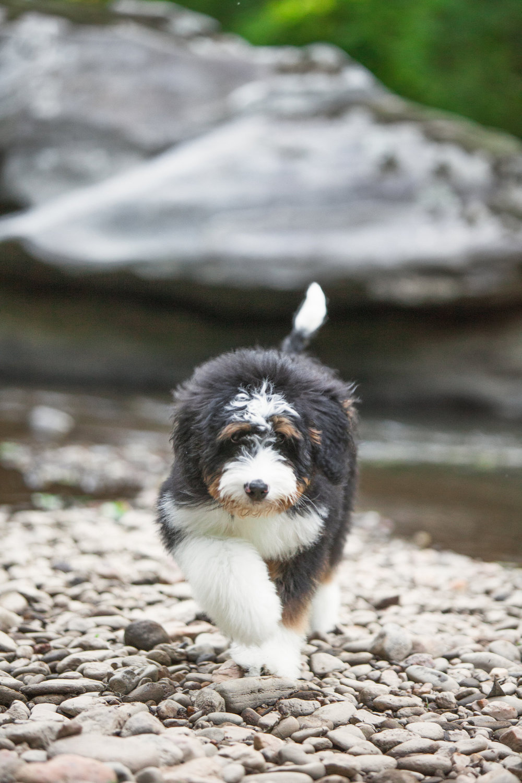 JuliaLindholmPhotos_Puppies53.jpg