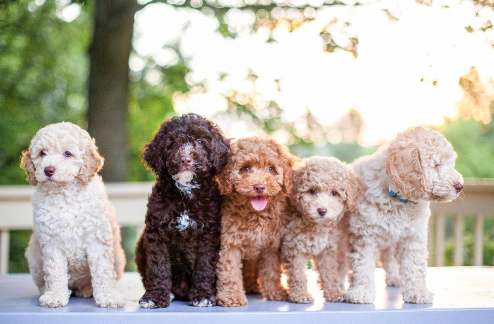 JuliaLindholmPhotos_Puppies57.jpg