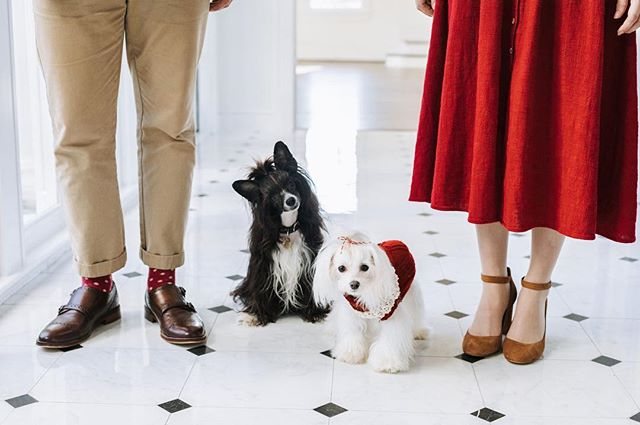 When couples bring their pups to their engagement session 🙌