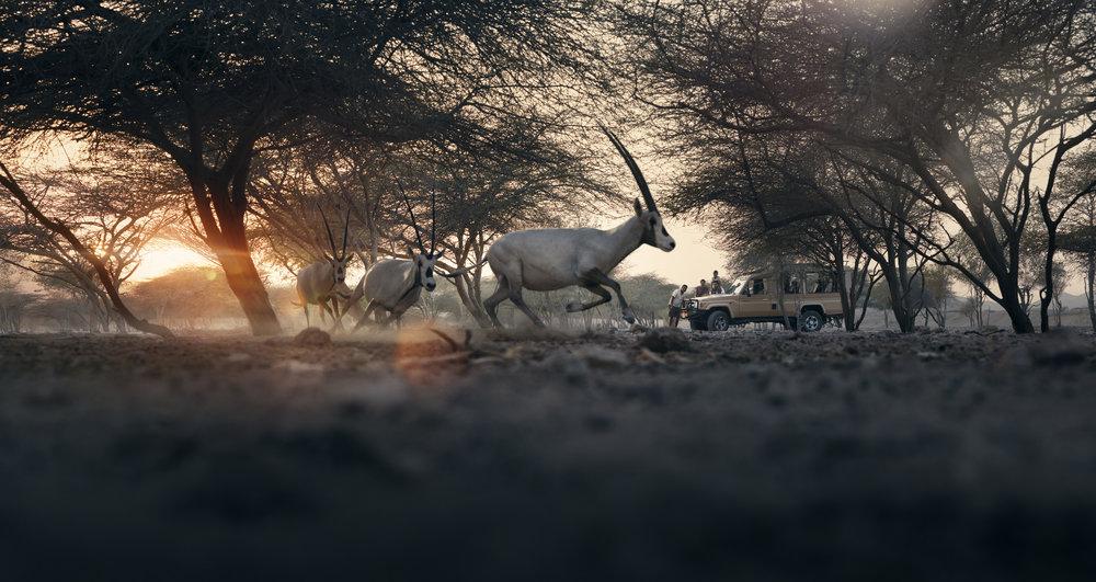 Animals_Sunset_3a.jpeg