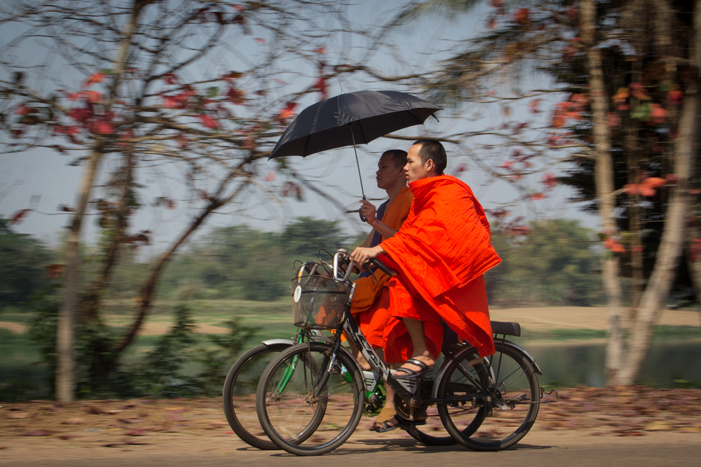 Monks cycling to temple with sun umbrella