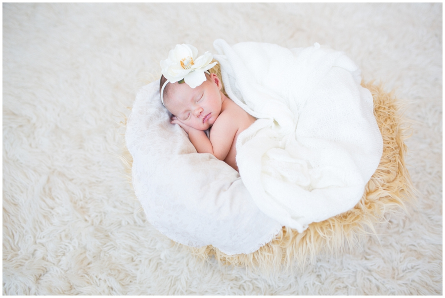 Albany  Newborn Photographer-20.jpg