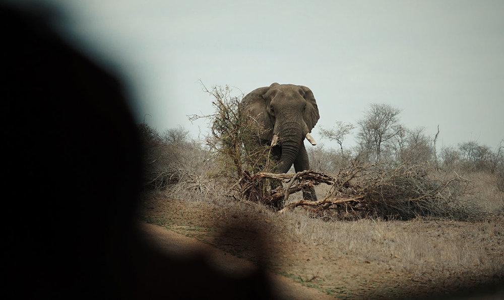 Kruger Preserve,South Africa // 2016