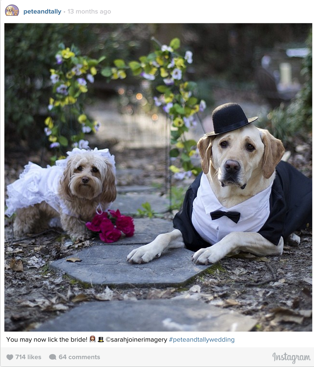 ptcomps_wedding_ceremony.jpg