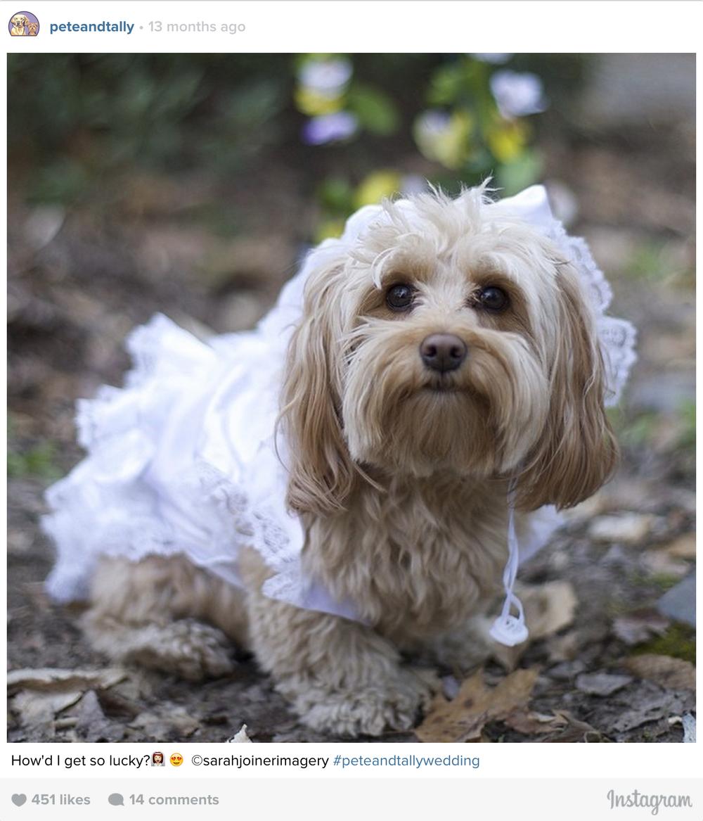 ptcomps_wedding_bride.jpg