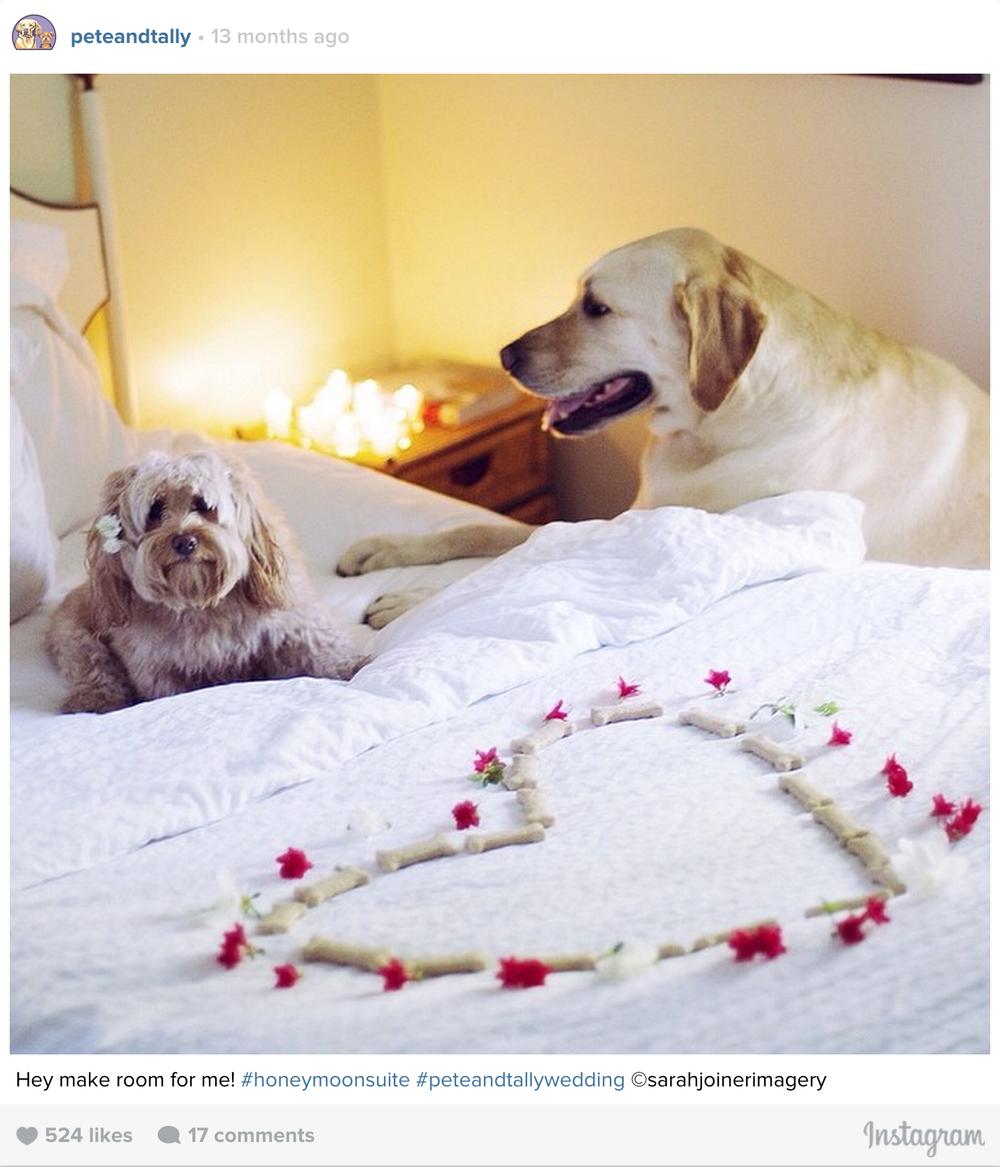 ptcomps_wedding_honeymoon1.jpg
