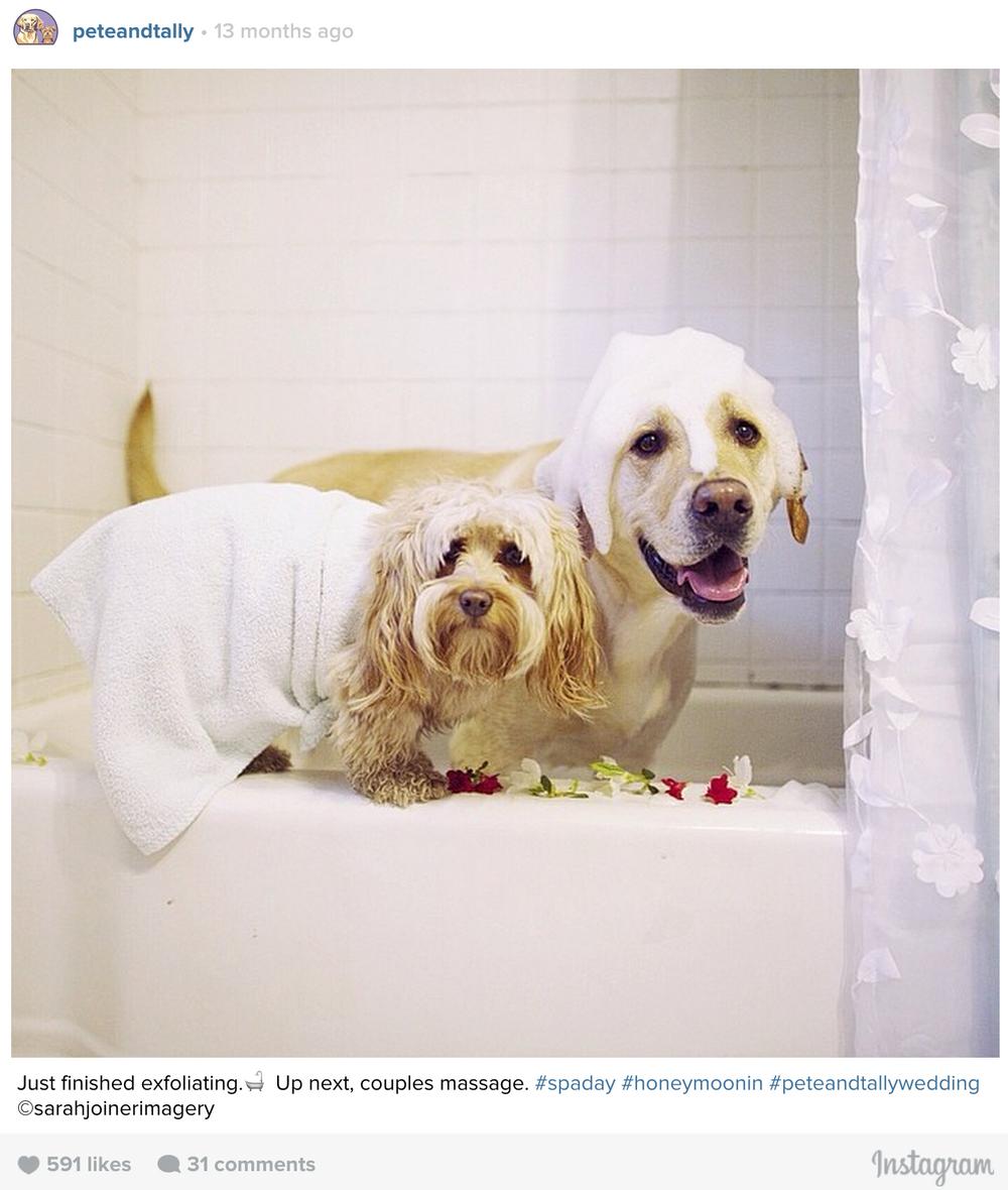 ptcomps_wedding_honeymoon2.jpg