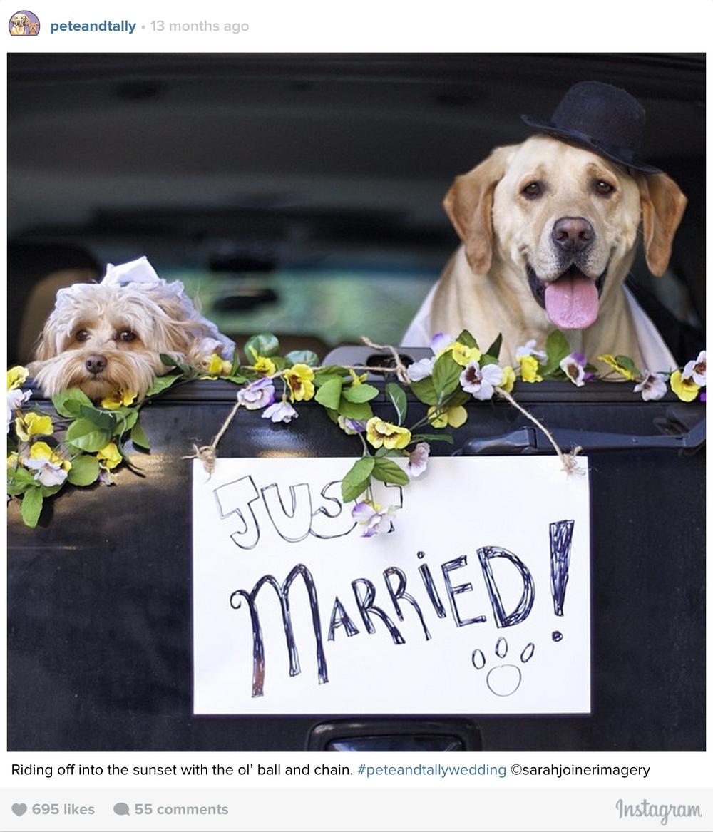 ptcomps_wedding_ridingoff.jpg