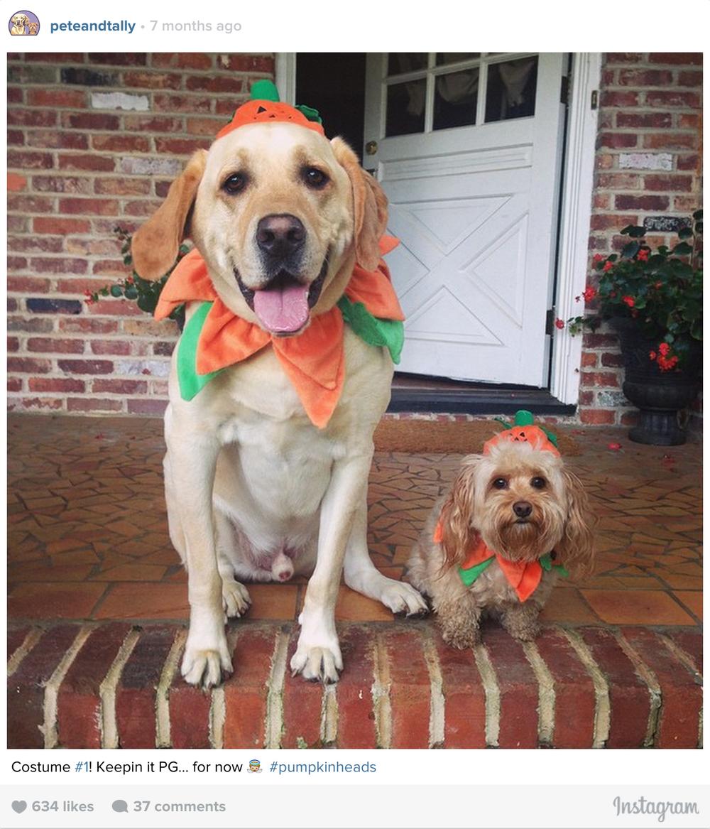 ptcomps_halloween_pumpkin.jpg