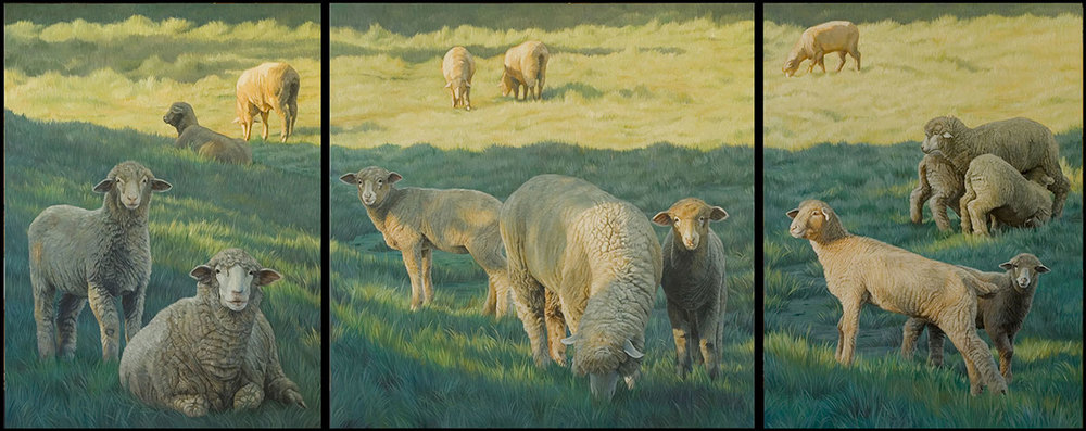 Sheep Triptych