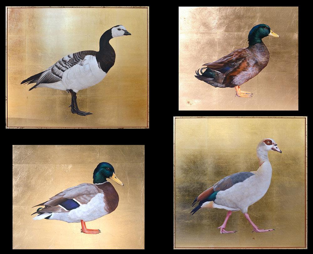 Barnacle goose, black American Mallard mix, Mallard, Egyptian Goose