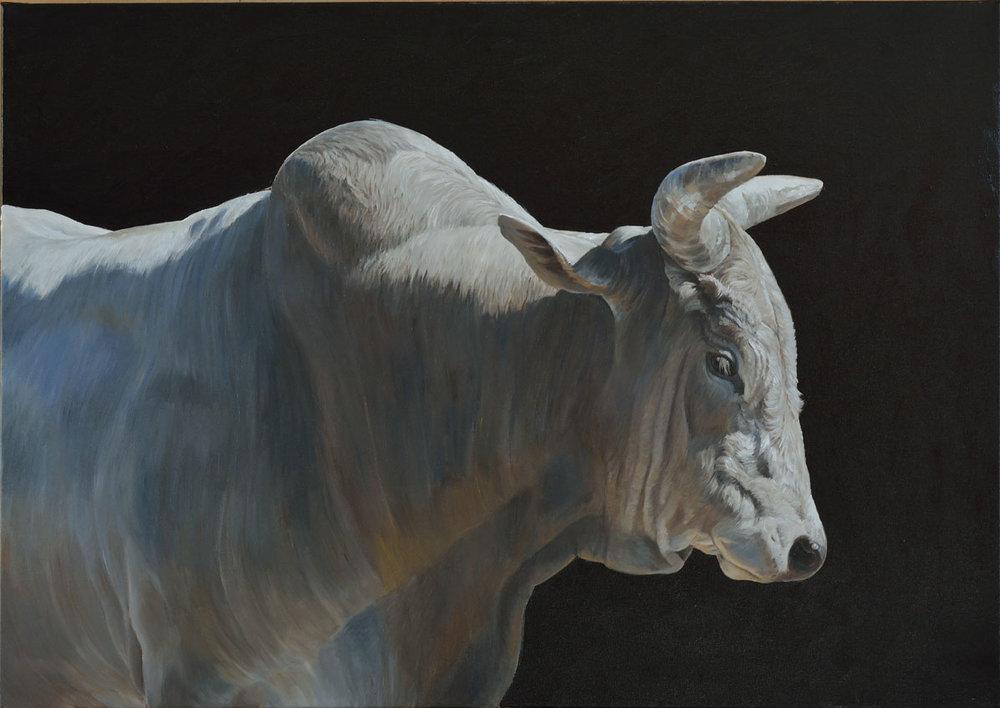 Bull (left)