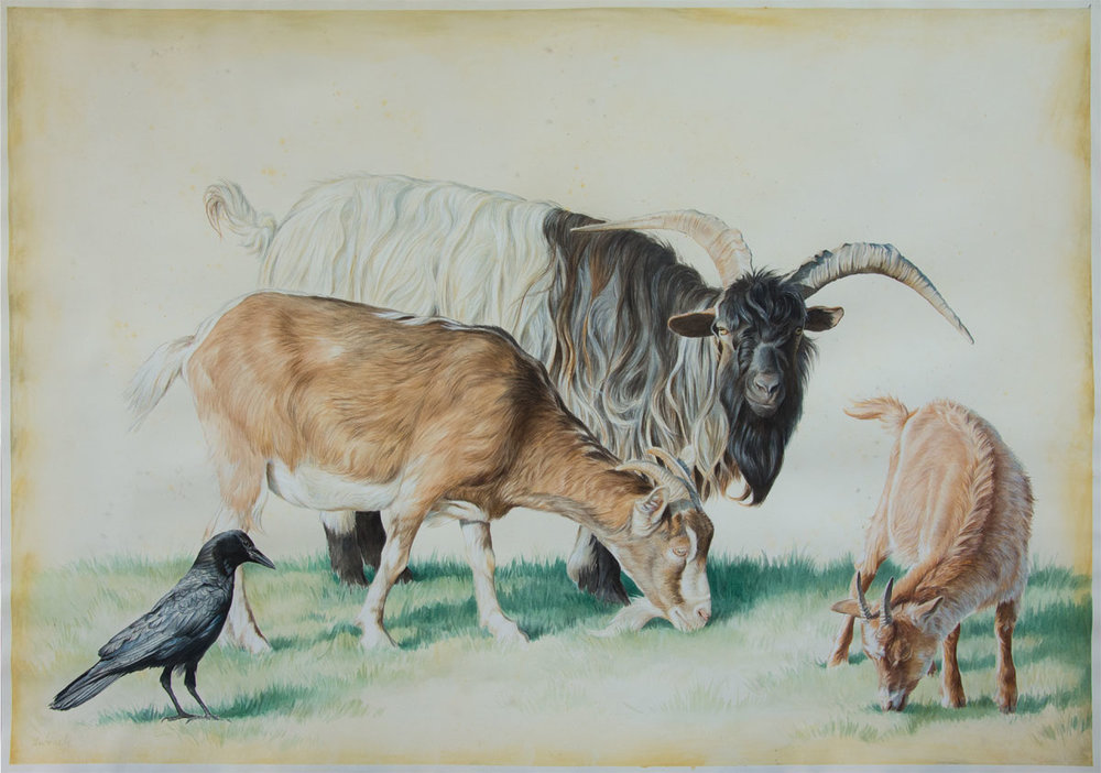 """Goats with Crow"""